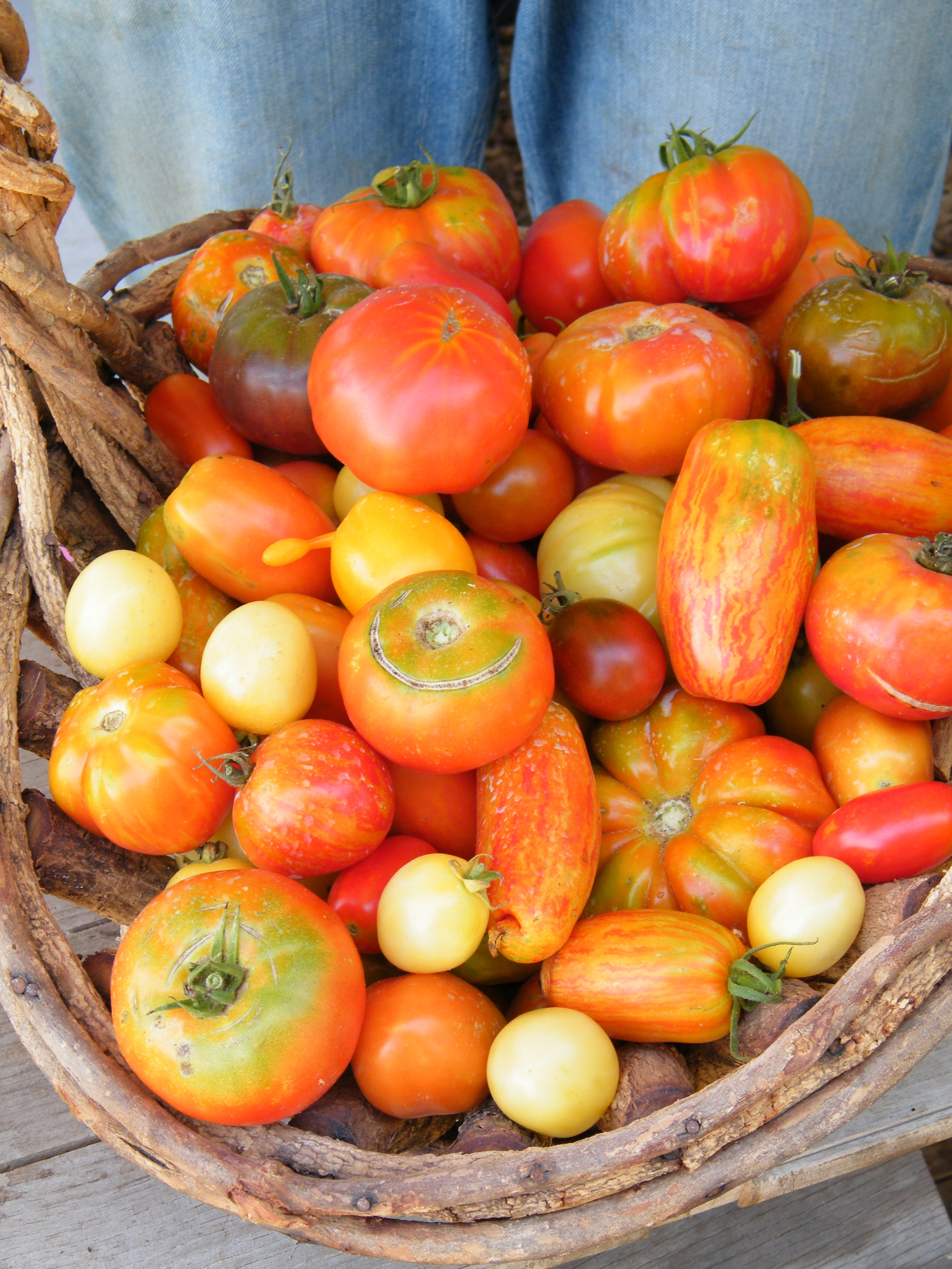 basket tomatoes